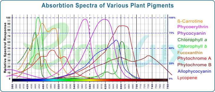 Absorption peaks of the major photosensitive substances in plants