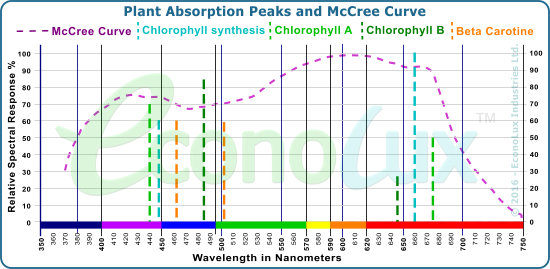The McCree Curve showing average plaant light absorption